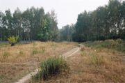 Соловьиная роща, июнь 2002 г.
