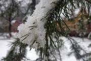 Снежный ренессанс